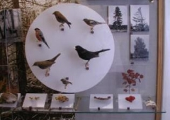 The exhibition of the nature of the region